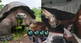 Sakawa man caught having s3kz with a tortoise in a new video 14