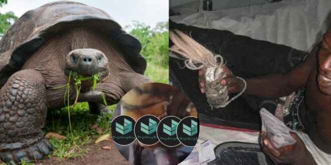 Sakawa man caught having s3kz with a tortoise in a new video 1