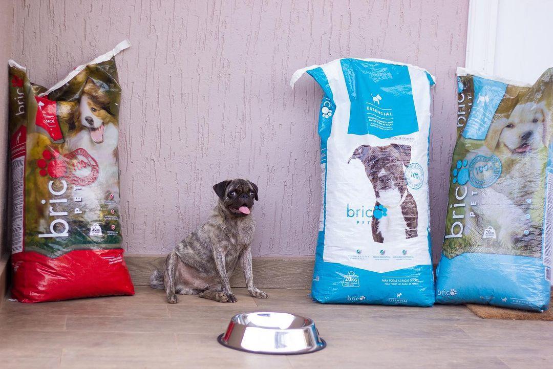 Medikal's dog bags an ambassadorial deal with a dog food company - Photos 6