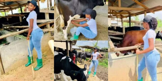 Beautiful lady rears cattle for a living; says she will not date sugar daddy. 1