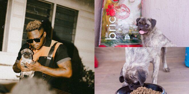 Medikal's dog bags an ambassadorial deal with a dog food company - Photos 1