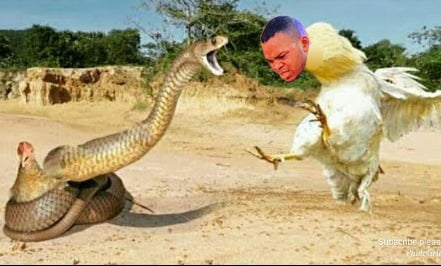 Video of how Angel Obinim turned a cock to save a teacher from a snake bite surfaces 2